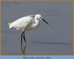 little-egret-59.jpg