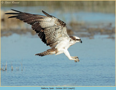 osprey-41.jpg