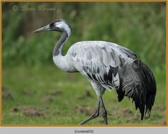 common-crane-03c.jpg