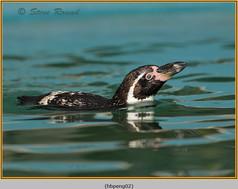 humboldt-penguin-02c.jpg