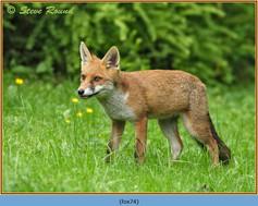fox-74.jpg
