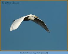 great-white-egret-35.jpg
