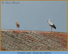 white-stork-14.jpg