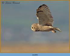 short-eared-owl-80.jpg