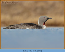red-throated-diver- 92.jpg