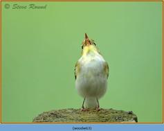 wood-warbler-63.jpg