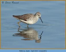 marsh-sandpiper-05.jpg