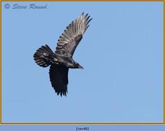raven-48.jpg