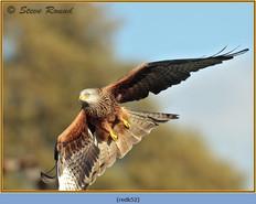 red-kite-52.jpg