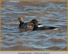 brent-goose-13.jpg