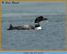 great-northern-diver-41.jpg