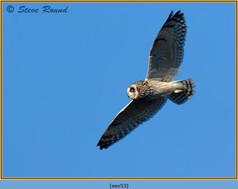 short-eared-owl-53.jpg