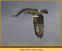 osprey-26.jpg