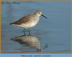 marsh-sandpiper-02.jpg