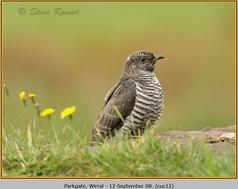 cuckoo-12.jpg