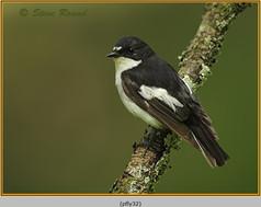 pied-flycatcher-32.jpg