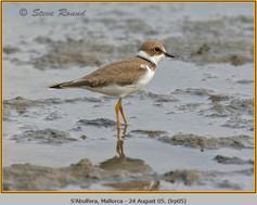 little-ringed-plover-05.jpg