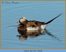 long-tailed-duck-54.jpg