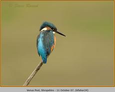 kingfisher-24.jpg
