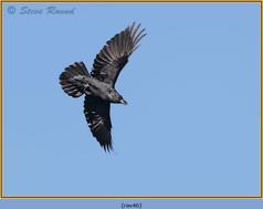raven-46.jpg