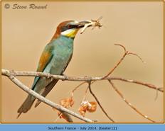 bee-eater-12.jpg