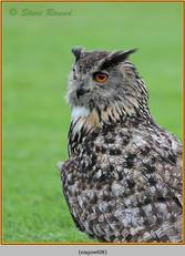 eagle-owl-08c.jpg