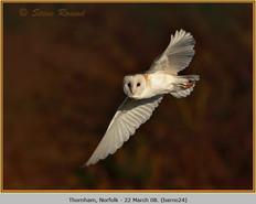 barn-owl-24.jpg