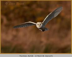 barn-owl-25.jpg