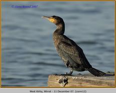 cormorant-12.jpg