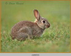 rabbit-16.jpg