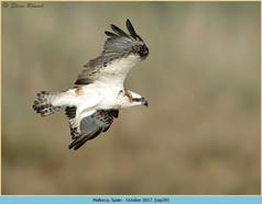 osprey-39.jpg