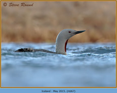 red-throated-diver- 67.jpg