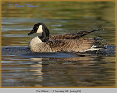 canada-goose-18.jpg
