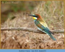 bee-eater-07.jpg