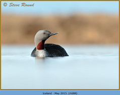 red-throated-diver- 88.jpg