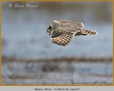 short-eared-owl-37.jpg