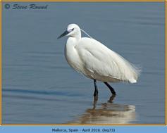 little-egret-73.jpg