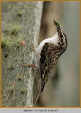 treecreeper-19.jpg