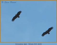 black-vulture-02.jpg