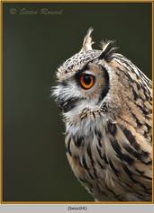 bengal-eagle-owl-04.jpg