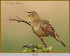 grasshopper-warbler-38.jpg
