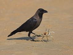 house-crow-04.jpg
