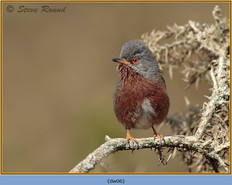 dartford-warbler-06.jpg
