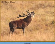 red-deer-46.jpg