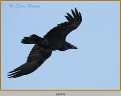 raven-15.jpg