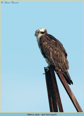 osprey-34.jpg