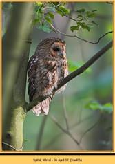 tawny-owl-06.jpg