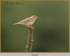 tree-pipit-02.jpg