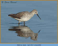 marsh-sandpiper-08.jpg