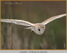barn-owl-20.jpg